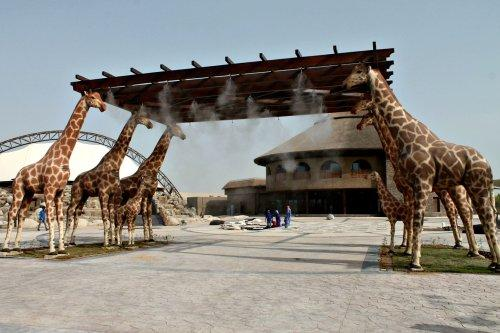 Entrace gate of Dubai Safari Park Al-Warqa