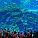 Ten Facts About Dubai Aquarium and Underwater Zoo