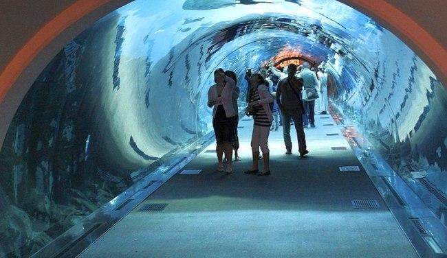 Dubai Mall Underwater Zoo Aquarium - The Dubai Aquarium Mall